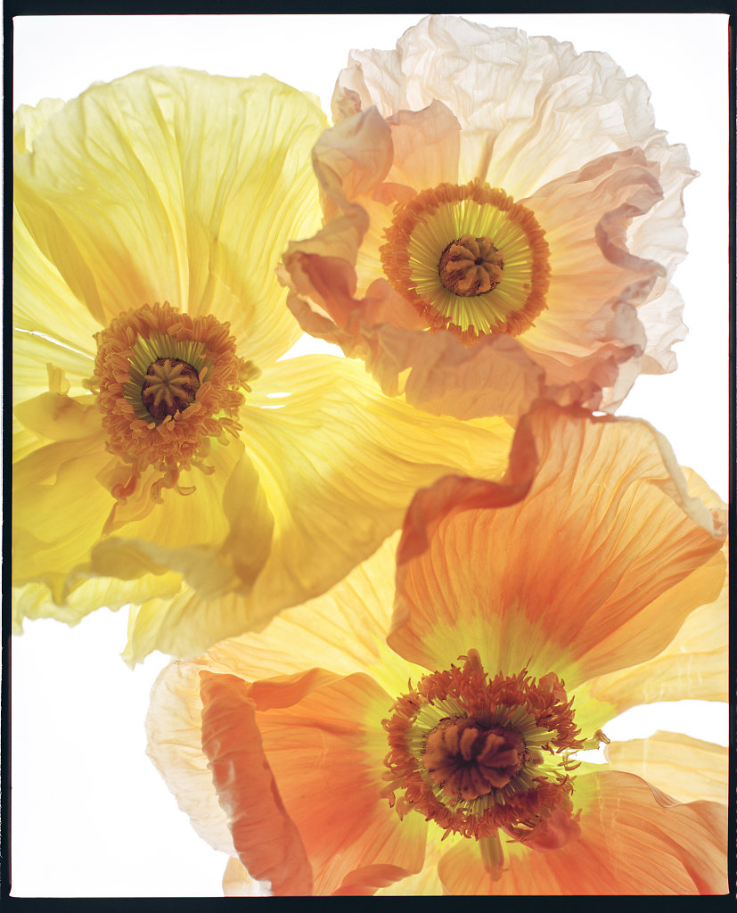 ormaie flowers